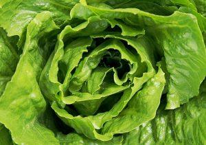 I colori del cibo - verde